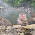 Monkeying Around in Japan at Jigokudani Snow Monkey Park