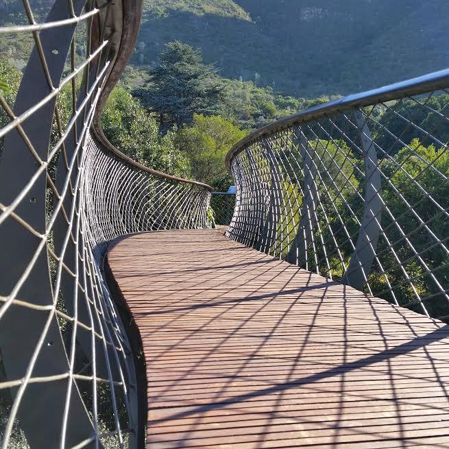 Canopy Walk at Kirstenbosch Botanical Gardens, Cape Town