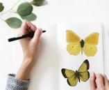 artist drawing butterflies