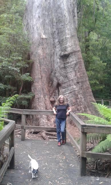 Ada Tree Loop Walk (4 Days)