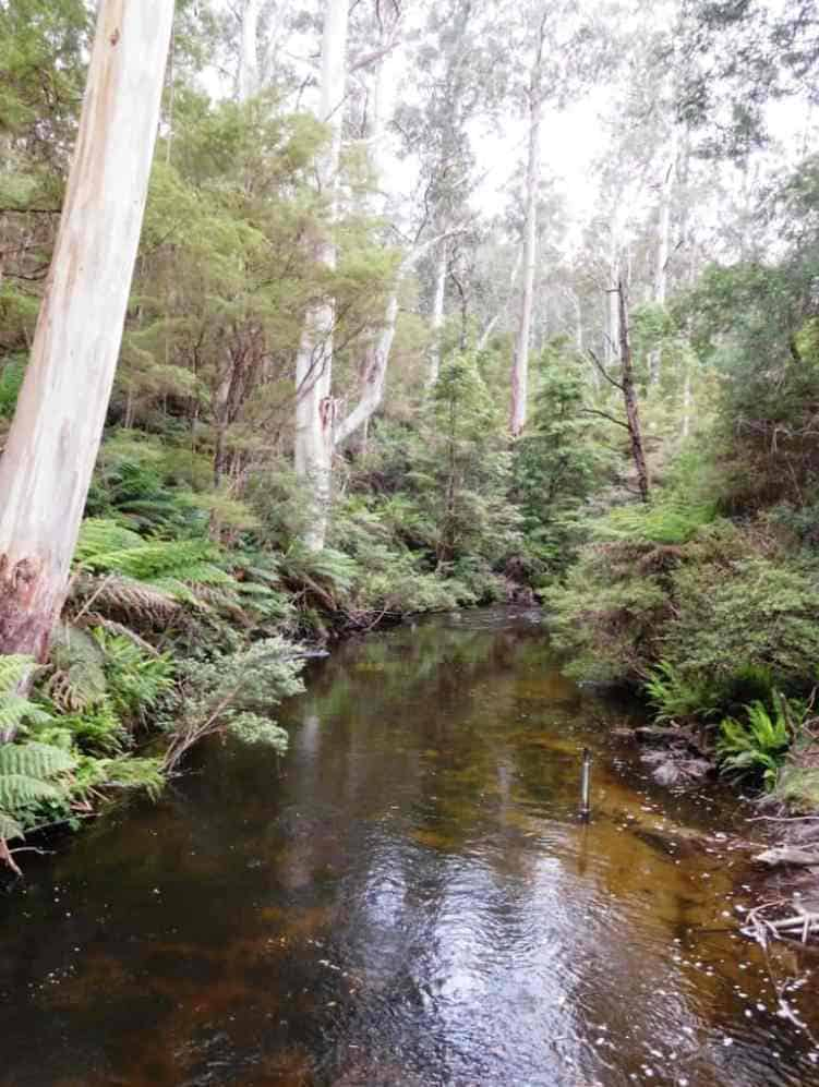 Camping by Victorian Rivers & Streams
