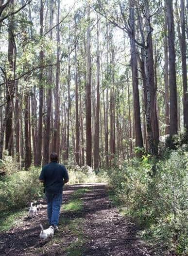 The Upper Yarra Walking Track