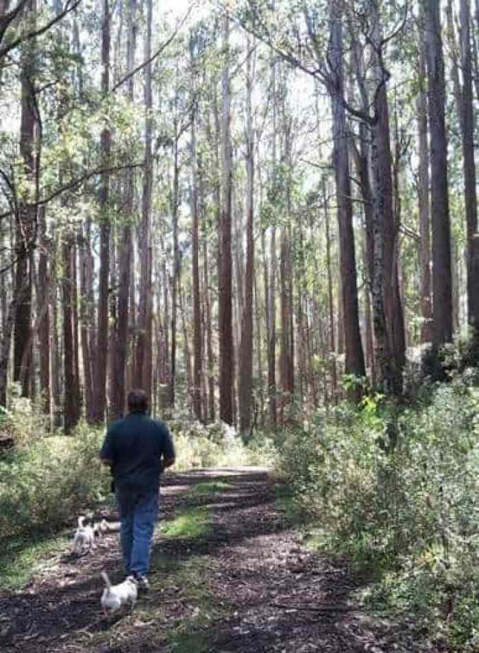 Newlands Track near Toorongo