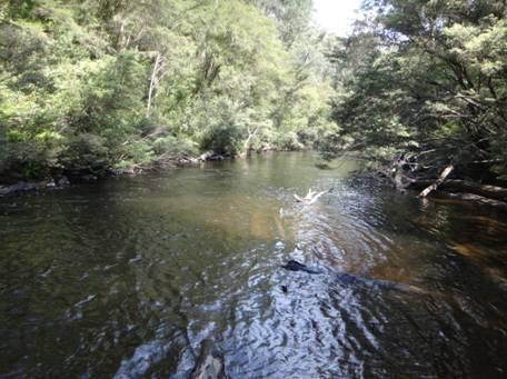 Tanjil River Canoe Trip