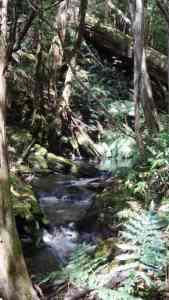 Mystery Falls Creek