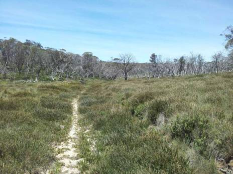 Wonderful Wilderness Areas in Victoria