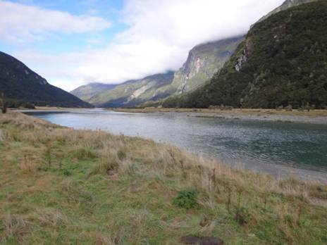 Fiordland: Wilkin-Young Track #6