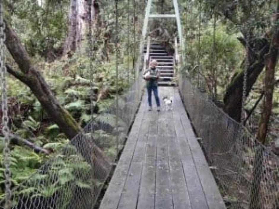 McKenzie River Rainforest
