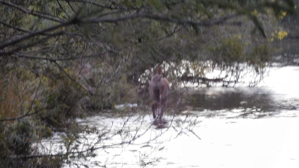 Spot's Hunting Adventures: Mystery River #3: