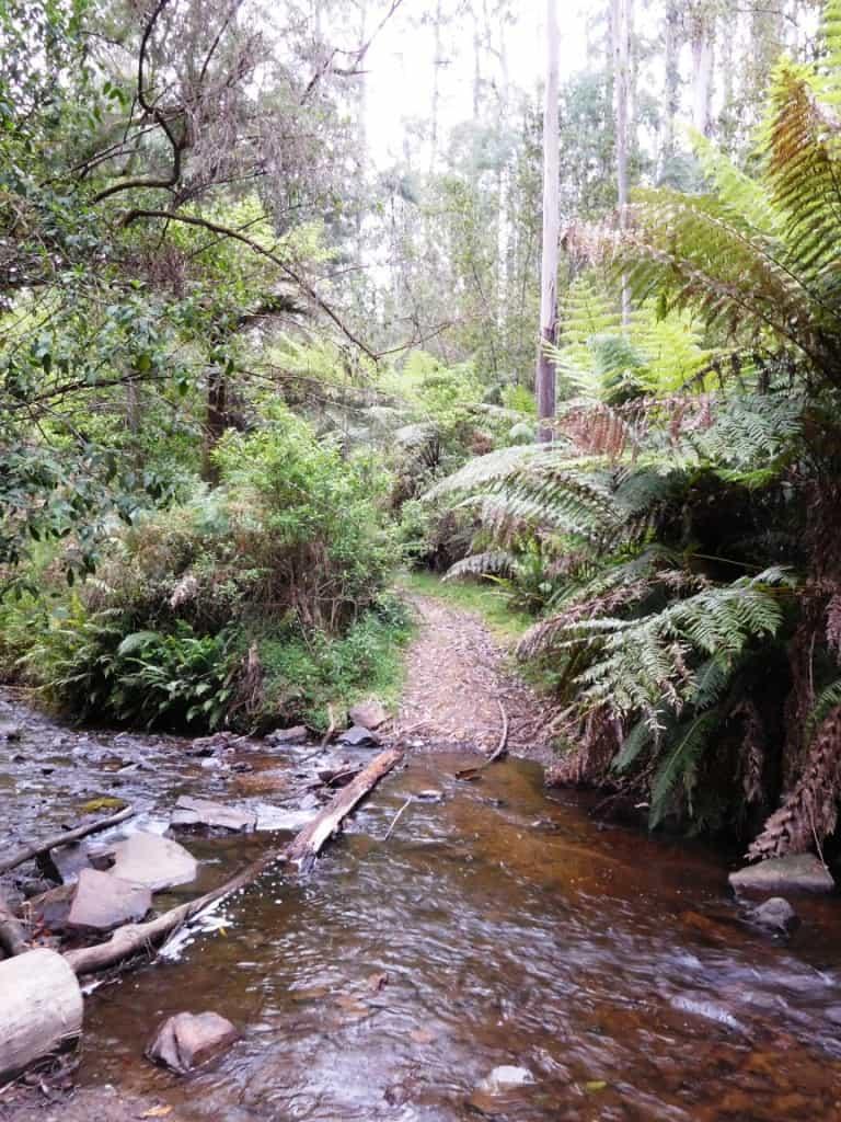 Upper Yarra Track: O'Shea's Mill: