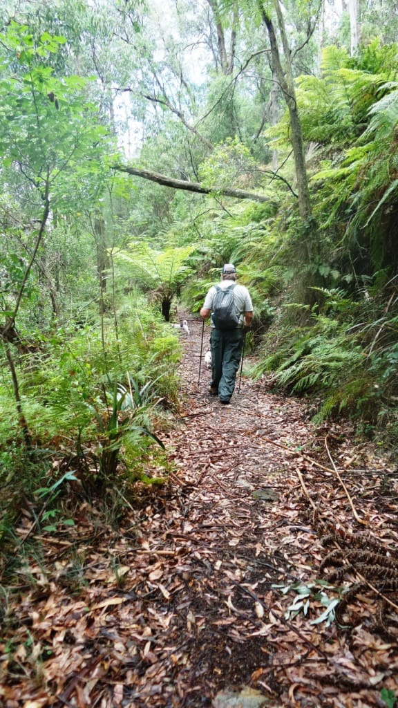 Upper Yarra Track: Section Five: Erica to Walhalla: