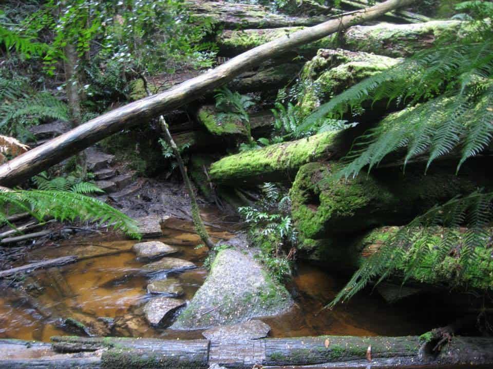 Upper Yarra Track Section Eleven: Ada Tree to Big Pat's Creek: