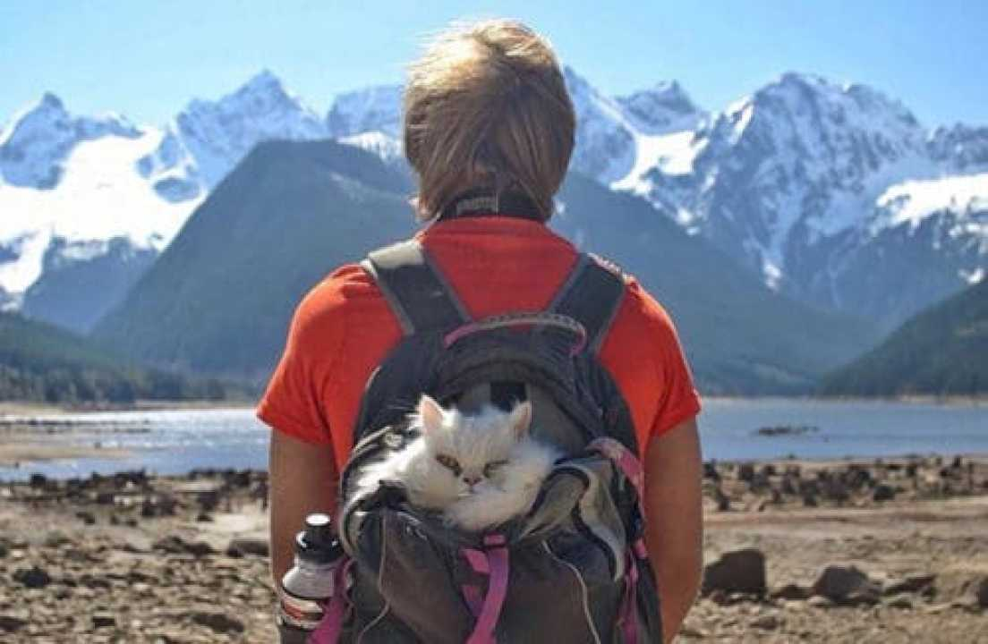 camping-with-cats-ryan-carter-42-579201642e1d3__605