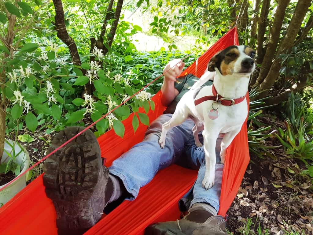 Adjustable Hammock Ridgeline