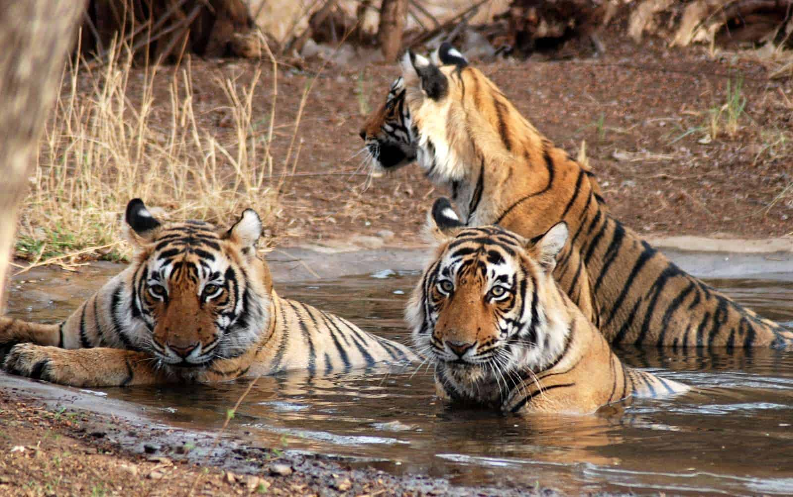 Amazing Lives: Jim Corbett and the Man-Eaters