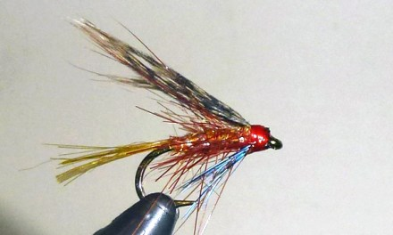 More Trad Wets