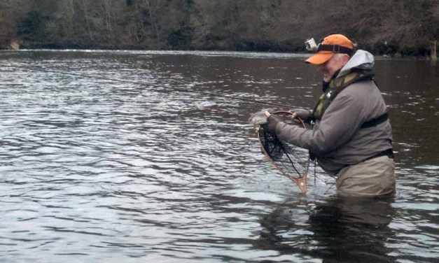 Chasing Clyde Grayling