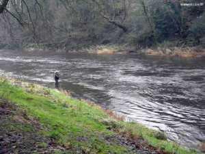 Angler on a swollen Annan