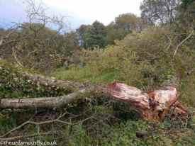 Split tree.