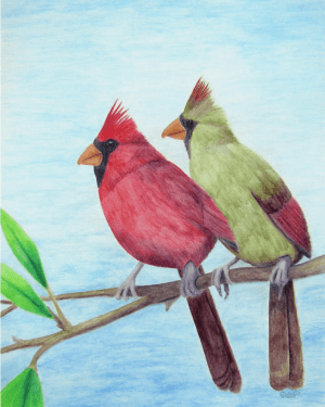 Cardinal Couple Professional Prints of Watercolor Pencil Avian Totem Animal Fine Art