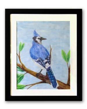 Blue Jay Watercolor Pencil Avian Totem Animal Fine Art Original