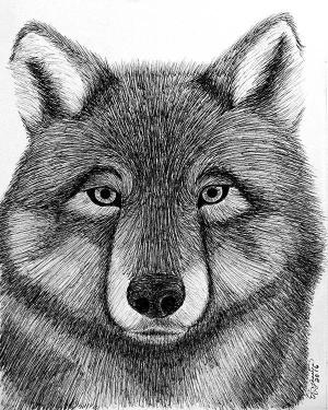 Poster - Wolf - Poster Of  Black Ink Pen Drawing Fine Art