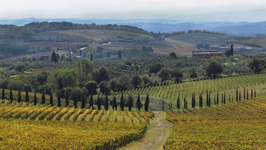 Chianti - Tuscany October 2015, after the grape harvest the vines turn Gold in the valleys.