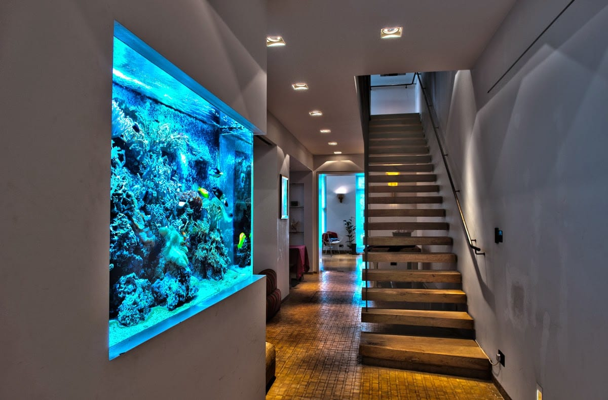 Amazing Home Aquarium in Living Room