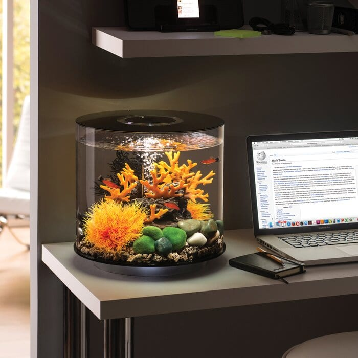 Cool Fish Tanks Ideas