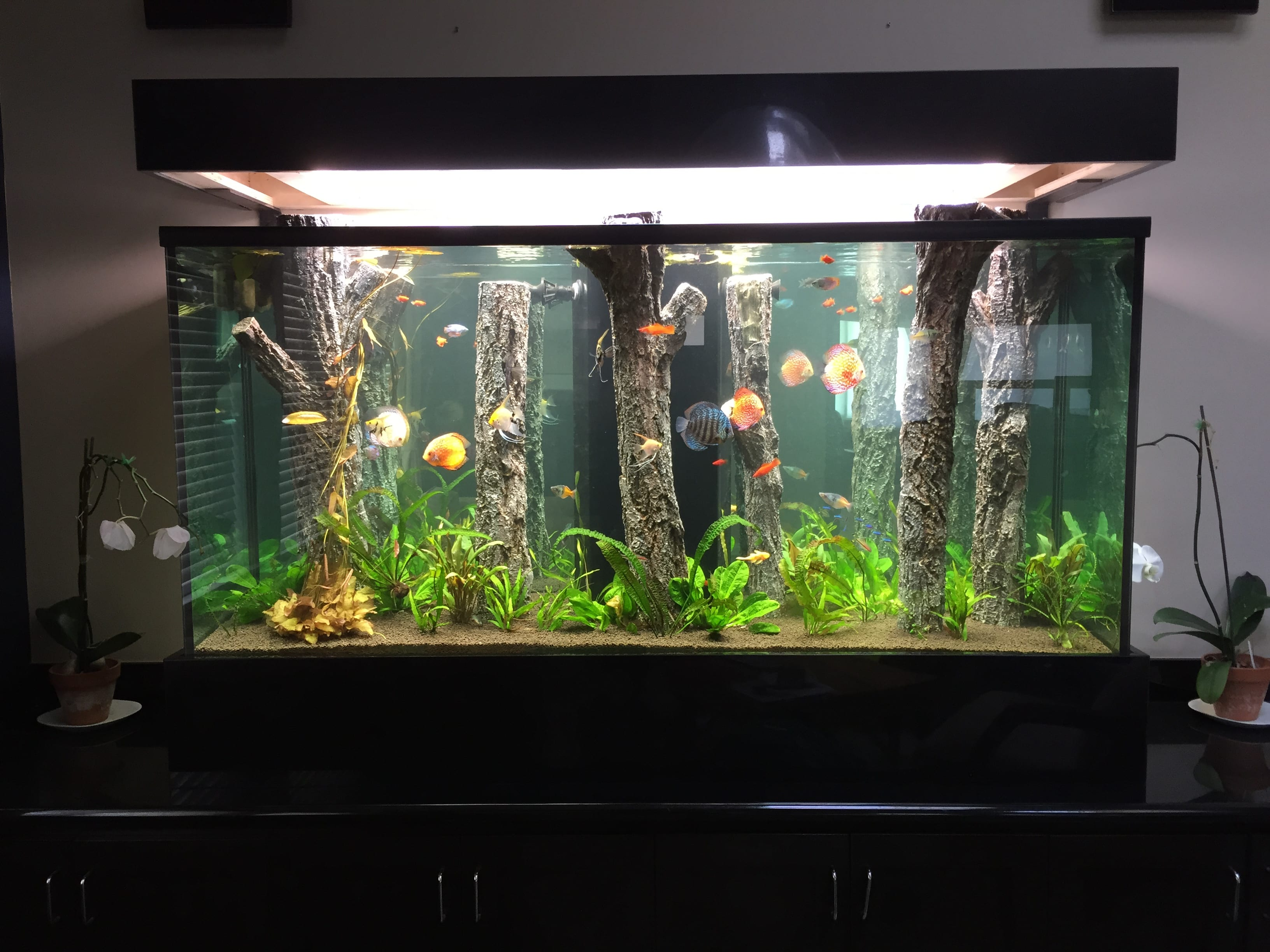 Small-Home-Aquarium-Design-Ideas
