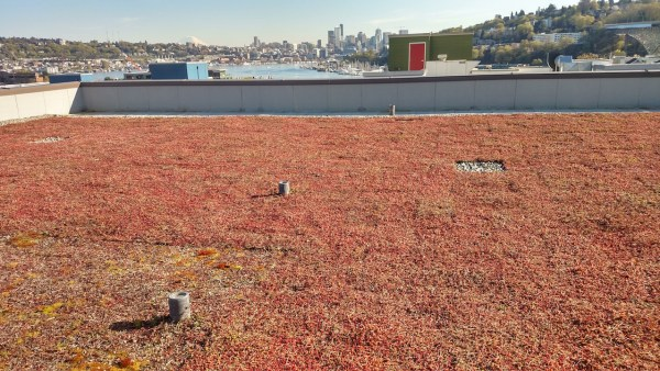 Green roofs help reduce the amount of runoff fouling streams.
