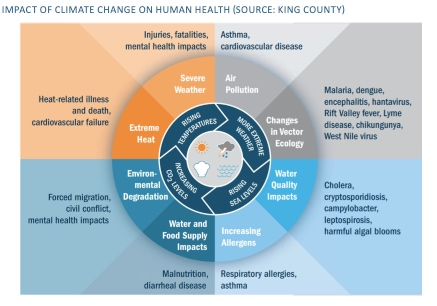 Impact of climate change on human health graphic highlight negative consequences of extreme heat, severe weather, air pollution, changes in disease vector ecology, worsening water quality, increasing allergens, water and food supply, and environmental degradation. (King COunty)