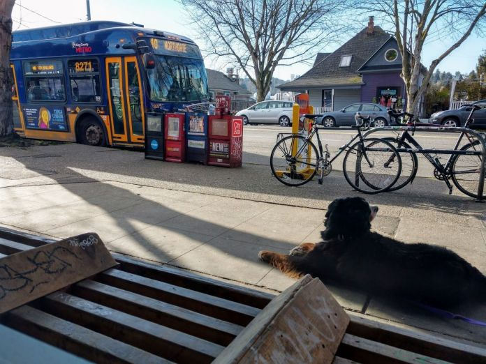 A dog is leashed to a bench next to a busy bike rack and row of newspaper machines as a Route 40 bus approaches.