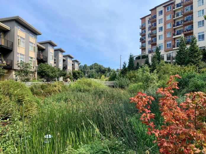 A photo of a natural wetland area between two tall apartment buildings.