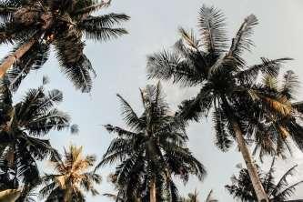 coconut-oil-hair-benefits
