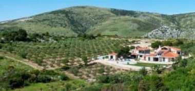 Olive Groves at Villa Drage