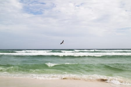 Sandestin, Florida beaches, and the Vacation Rental Guide