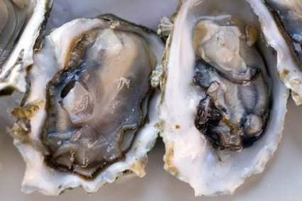 Washington Oysters, near Ocean Park