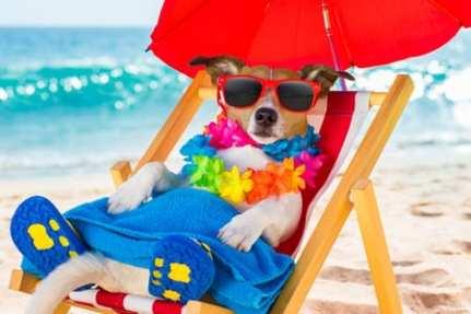 Pet Friendly Paradise on Oregon Beach