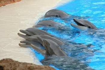 dolphins, Marco Island, florida