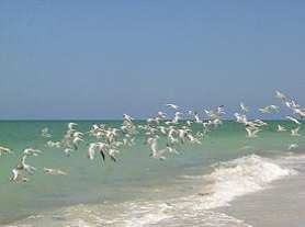Birds on Captiva Island