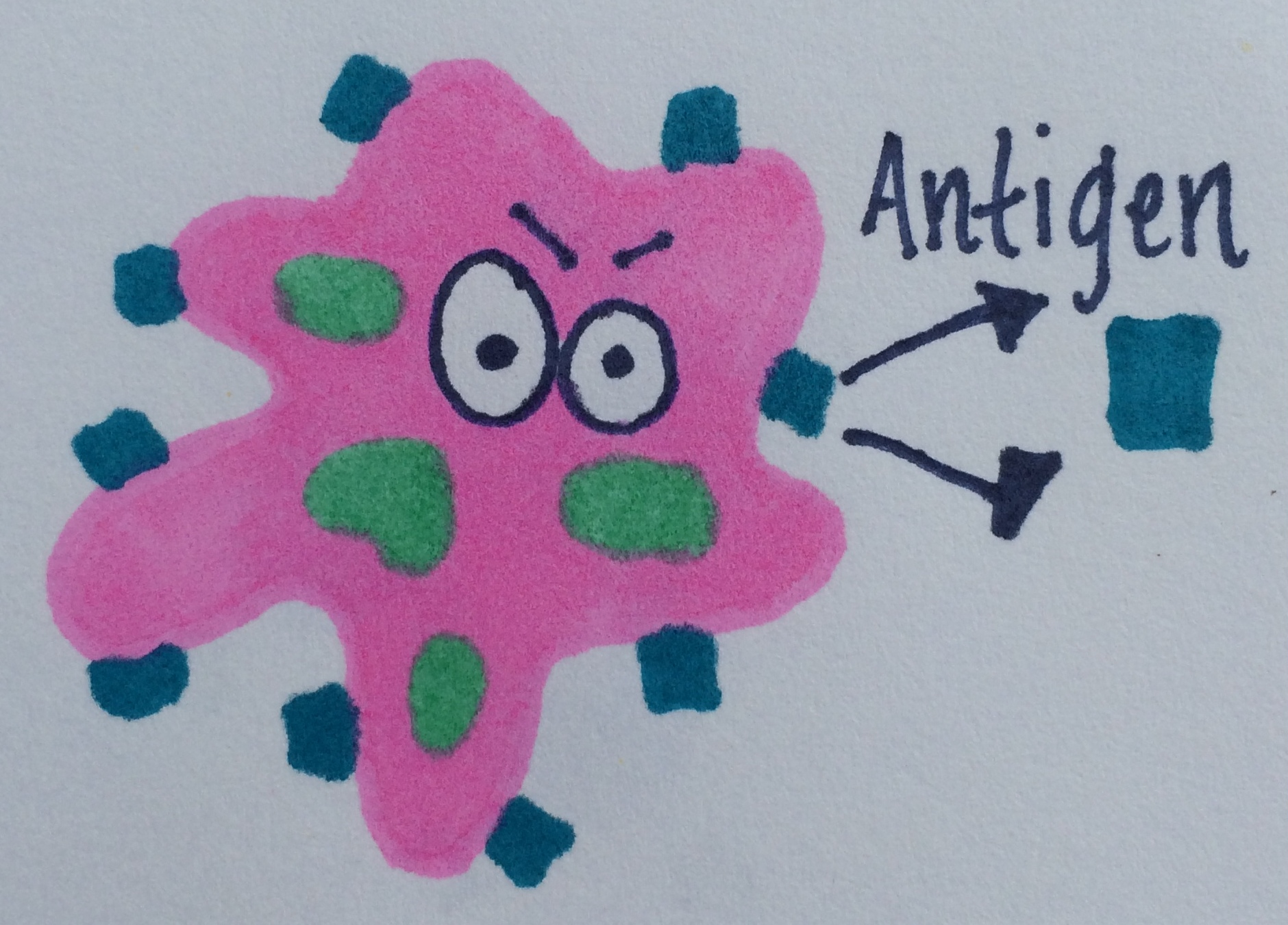 The Beautiful Immune System Lesson 3 What Is An Antigen