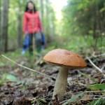 A mushroom in Soma National Park (Soomaa.com)