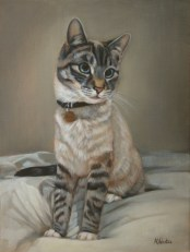 Pet portrait in Oils of a cat by Annabelle Valentine