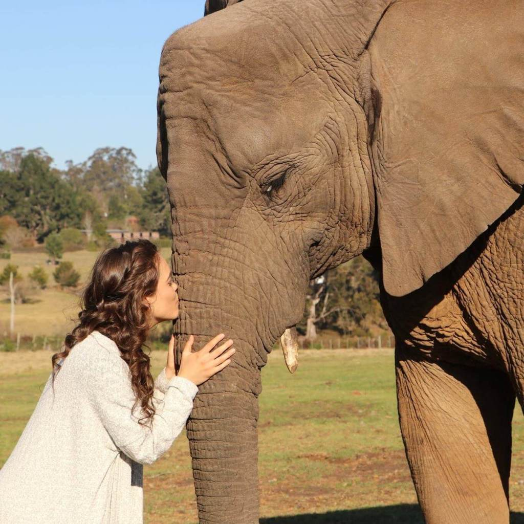 My Experience Volunteering with Elephants in South Africa | The Vegan Abroad