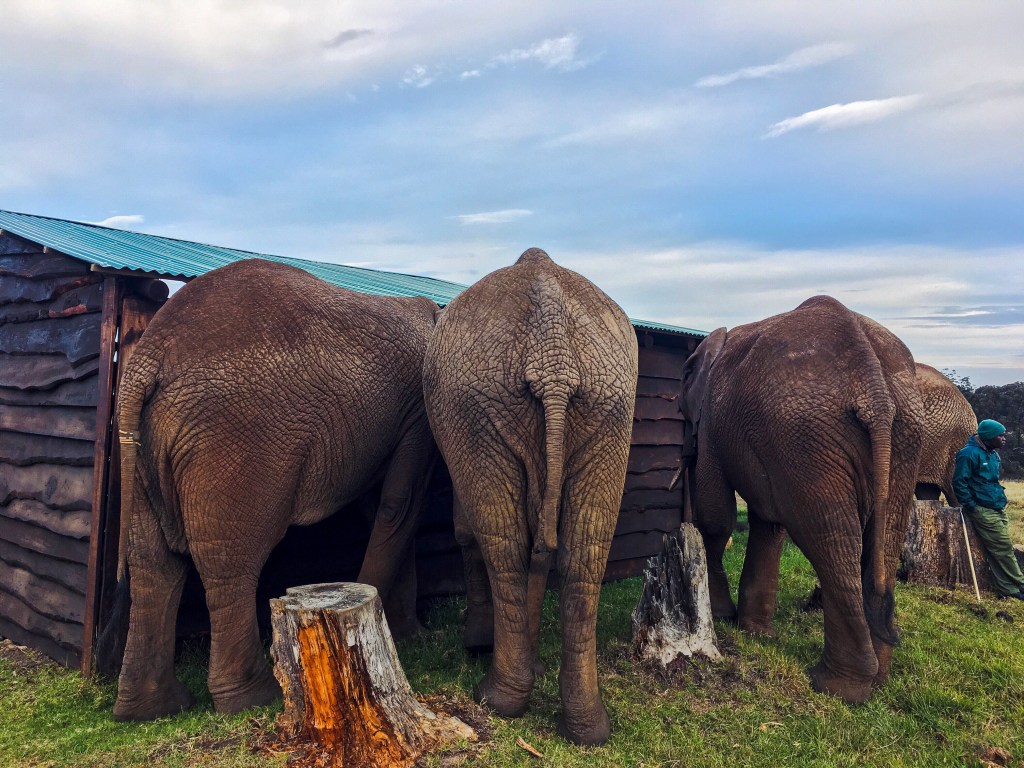 Volunteer with elephants in South Africa | The Vegan Abroad