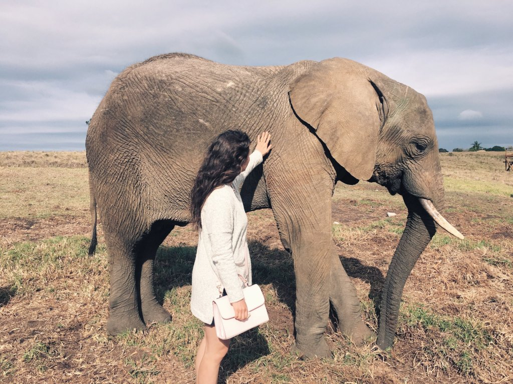 Volunteer with elephants in South Africa | www.theveganabroadblog.com