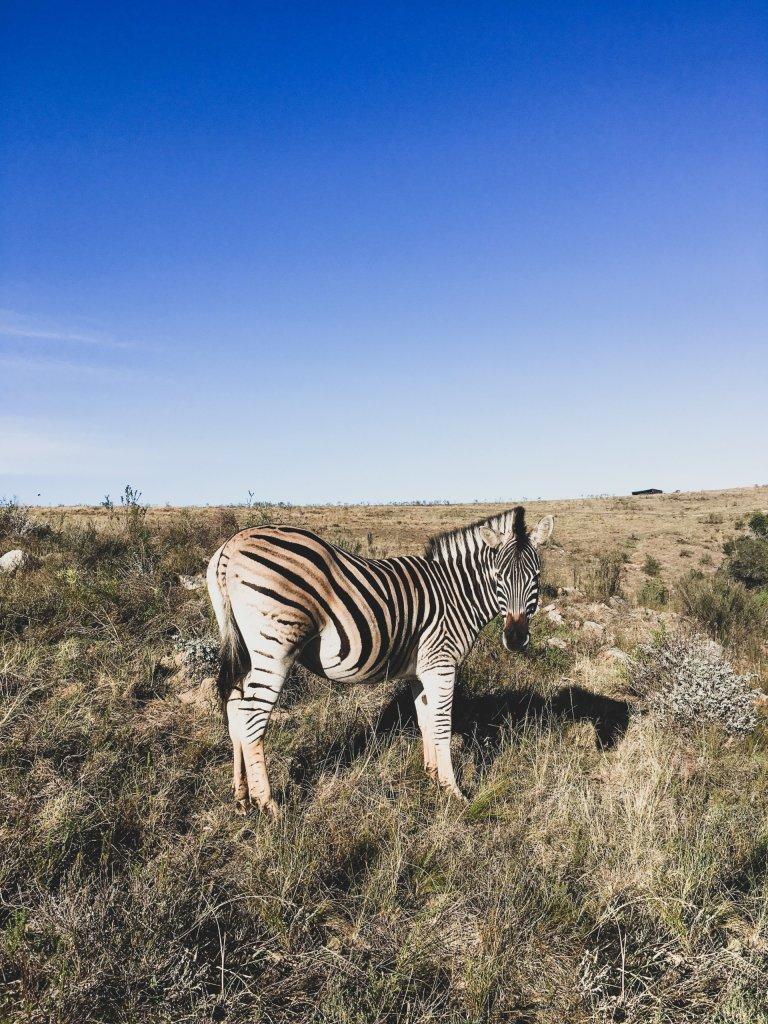 Is volunteering with wildlife ethical? | theveganabroadblog.com