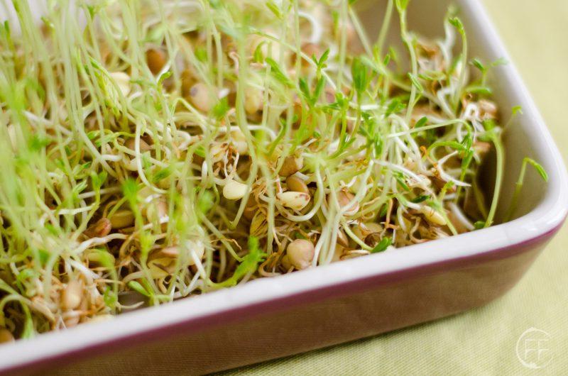 Germogli: massima quantità di nutrienti al minimo costo