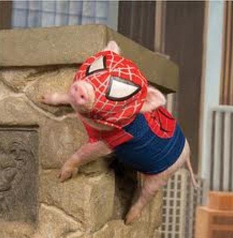 Top 10 Amazing Animals In Spiderman Costumes